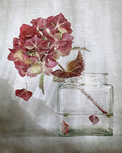 Kunst für Alle Impresión artística/Póster: Mandy Disher Hydrangea - Impresión, Foto, póster artístico, 55x70 cm