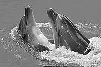 イルカの壁紙-動物の壁紙-#32200 - 白黒の キャンバス ステッカー 印刷 壁紙ポスター はがせるシール式 写真 特大 絵画 壁飾り105cmx70cm