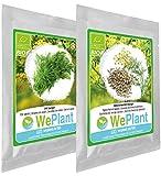 BIO/ORGANICO Eneldo & Hinojo común - Semillas ecológicas de plantas naturales/Interior & Exterior