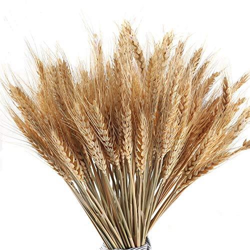 MHMJON 100 Pcs Dried Wheat Sheaves Bundle, Golden Natural Wheat Bouquet Bunch Artifical Flowers Full Arrangement DIY Design Home Table Wedding Party Centerpieces Decorative