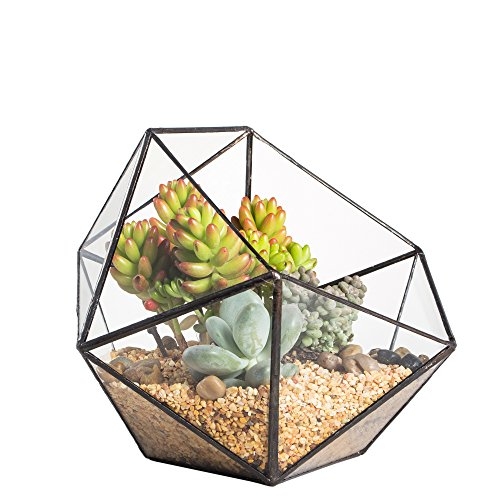 Geometric Glass Terrarium Half Ball Pentagon Planter Indoor Balcony Window Sill Succulent Plant Cacti Fern Flower Pot Container Tabletop Bowl Shape Vase Miniature Centerpiece (No Plants Included)