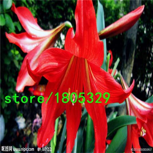 Bloom Green Co. graines GGG AAA glaïeul, graines glaïeul bon marché, graines en pot glaïeul, balcon Bonsai fleur - 500 pcs/sac: Jaune