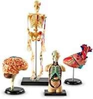 Learning Resources Anatomy Models Bundle Set, Brain, Body, Heart, Skeleton, Classroom Demonstration Tools, Teacher...
