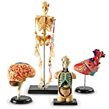 Learning Resources Anatomy Models Bundle Set,...