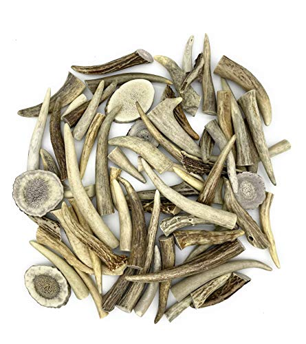 Antler Tips 8-Ounces of Polished Tips for Jewelry Crafts 1 to 3-in Long Plus Sliced Disks for Earrings,Pendants