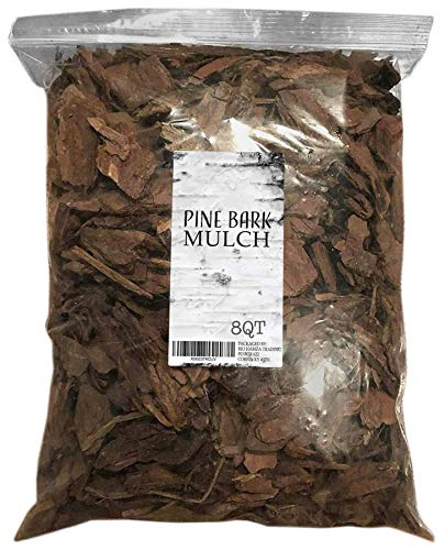Best <strong>Mulch Indoor Plants</strong>