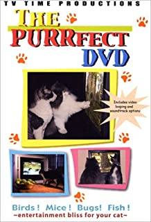 The Purrfect Cat Entertainment Video