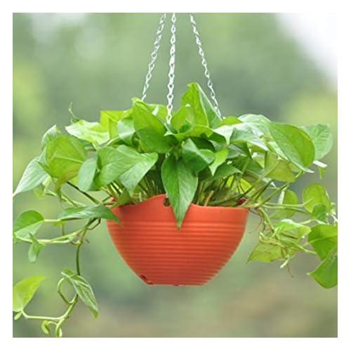 Airex Plastic Flower Plant Hanging Pot Chain Decoration (Multicolour)