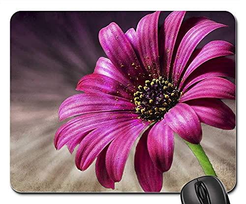Mauspad Daisy Pink Blume, Makro Natur Garten-Blumen Office Mauspad Mit Motiv Gaming Mauspad Niedliches Mousepads Matte Für Büro Voyager Laptop 25X30Cm