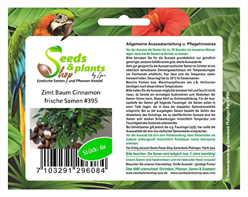 Stk - 6x Zimtpflanze Elettaria cardamomum Garten Pflanzen - Samen #395 - Seeds Plants Shop Samenbank Pfullingen Patrik Ipsa