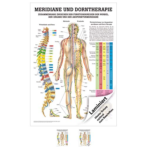 Rüdiger Meridiane u. Dorn Mini-Poster Anatomie 34x24 cm medizinische Lehrmittel