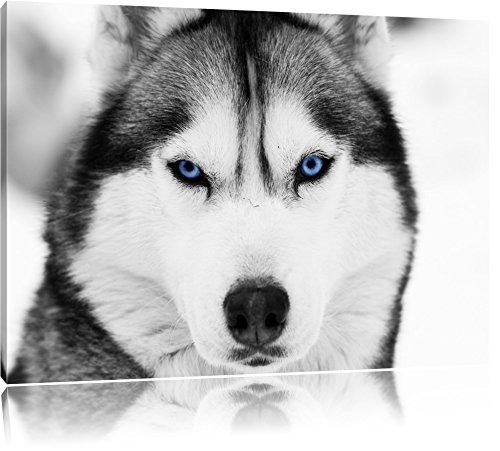 Husky mit blauen Augen schwarz/weiß Format: 80x60 auf Leinwand, XXL riesige Bilder fertig gerahmt mit Keilrahmen, Kunstdruck auf Wandbild mit Rahmen, günstiger als Gemälde oder Ölbild, kein Poster oder Plakat