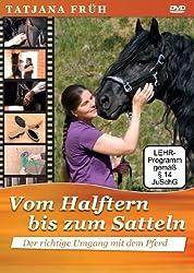 Beim Halftern fängt alles an: Die wichtigsten Schritte zur richtigen Pferdepflege 1