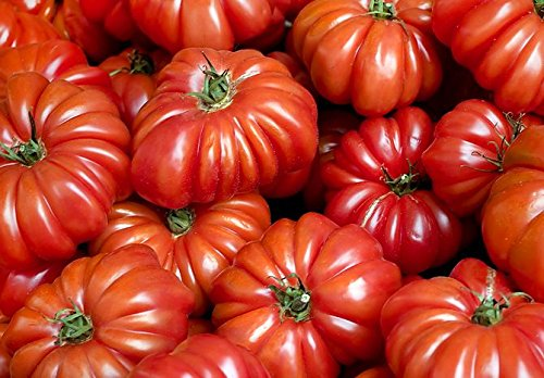 30+ Costoluto Genovese Pomodoro Tomato Seeds, Heirloom Non-GMO, Low Acid, Indeterminate, Open-Pollinated, Productive, from USA