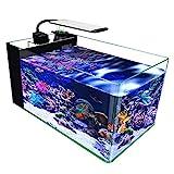 GankPike 10-Gallon Saltwater Aquarium Rimless Low Iron Aquarium Ultra Clear Glass Marine Fish Tank Reef Tank with Lid, Protein Skimmer, LED Light, Heater, LCD Digital Thermometer and Pump