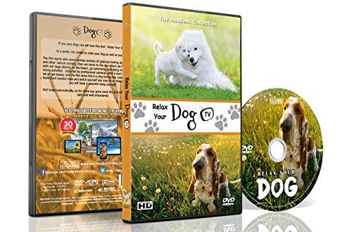 DVD für Hunde zum Anschauen - Entspannende Hundevideos - Entspannen sie Ihre Hunde mit supersüßen Hunden in natürlicher Landschaft von Stränden bis Schnee, um Ihren Hund zu beruhigen