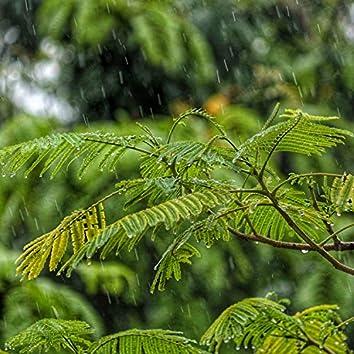 Summer Blissful Summer Rain Sounds for Relaxation & Meditation