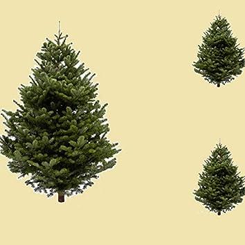 Tree Shaped
