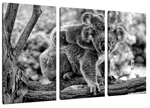 Pixxprint Koala Mutter mit Kind auf dem Rücken, Monochrome als Leinwandbild 3 teilig/Größe: 120x80 cm/Wandbild/Kunstdruck/fertig bespannt