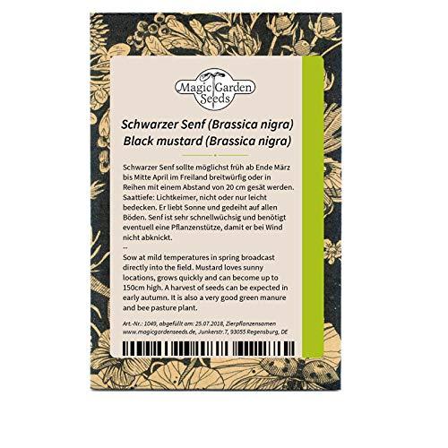 Schwarzer Senf (Brassica nigra) 200 Samen Senf-Kohl