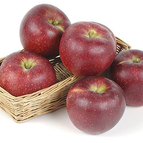 国華園 食品 りんご 長野産 秋映 5kg 1箱
