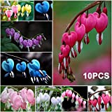 HotMall Flower Seeds in Spring, 10Pcs Perennial Herbs Dicentra Spectabilis Flower Plant Bleeding Heart Seeds for Home Garden Yard Balcony Roof Decoration