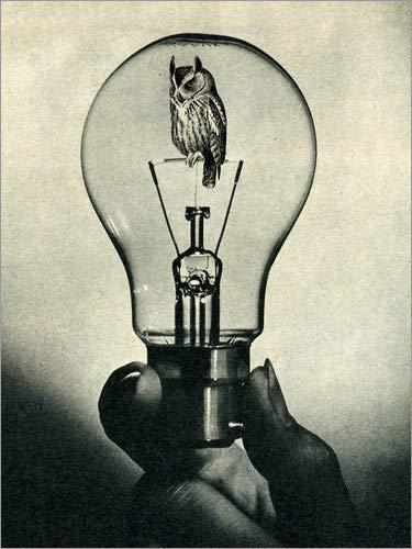 Posterlounge Leinwandbild 70 x 90 cm: nightowl von Sammy Slabbinck - fertiges Wandbild, Bild auf Keilrahmen, Fertigbild auf echter Leinwand, Leinwanddruck