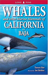 Whales of California and Baja: And Other Marine Mammals by Tamara Eder (1-Jan-2002) Paperback