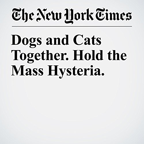 Dogs and Cats Together. Hold the Mass Hysteria. copertina