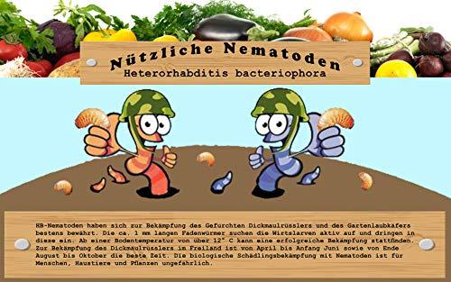 Vgo... 1 MIO Nematoden für 2 qm / 10 Pflanzen zur Bekämpfung von Dickmaulrüßler