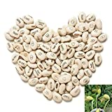 Plant Seeds for Planting 20Pcs White Magic Bean Seeds Gift Plant Growing Message Painting Word