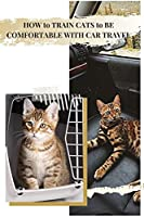 HOW tо TRAIN CATS tо BE COMFORTABLE WITH CAR TRAVEL: YOUR THOUGHTS ON CATS CHEWING & BITING FINGERS?