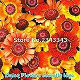 geoponics 100 pc/sacchetto gerbera semi nuovi ibridi * misto semi vaso bonsai facile da coltivare per jardin * giardini seed multi-colored