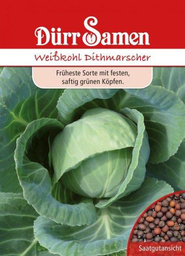 Weißkohl Dithmarscher von Dürr-Samen