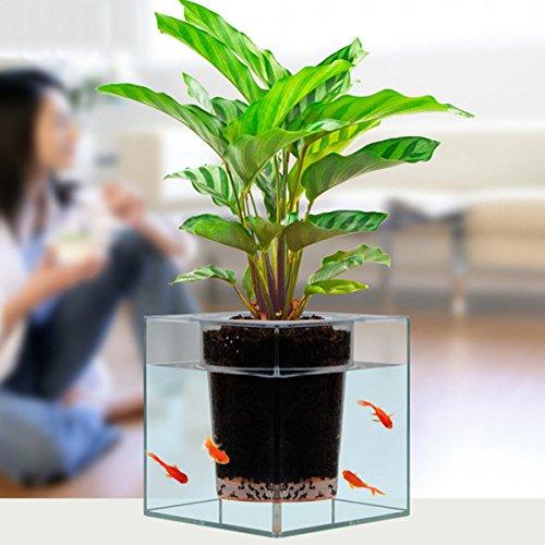 Bureze Pot de fleurs 2 en 1 pour aquarium avec auto-arrosage