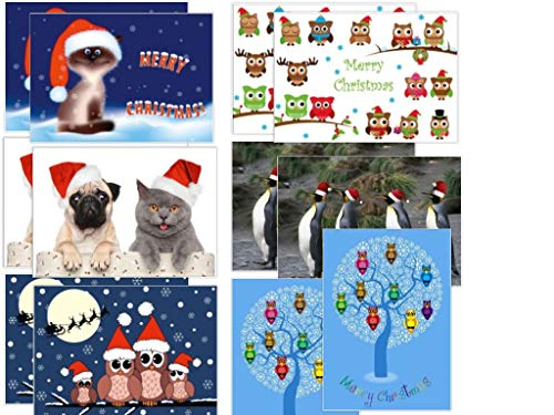 Edition Colibri - Juego de 12 tarjetas de Navidad divertidas (12 unidades), diseño de gatos, búhos y gaviotas