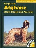 Afghane - Saluki, Sloughi und Azawakh