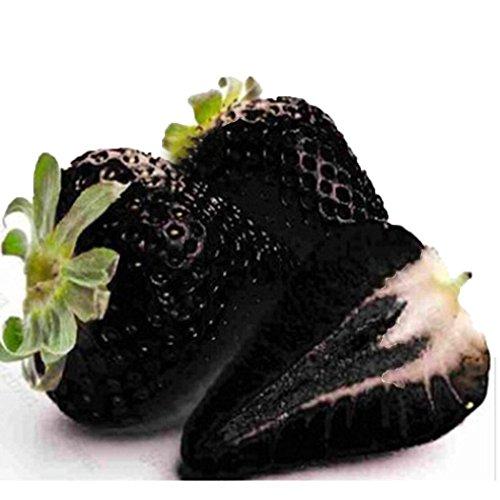Acecoree Samen Haus- 100 Stück Riesenerdbeeren Zuckersüß, Raritäten Erdbeersamen großfruchtig Obst Saatgut mehrjährig Bio Obstsamen für Balkon, Garten,Bauernhof