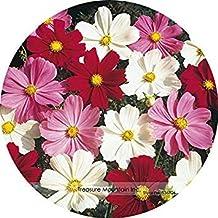 VISTARIC 4: Semillas Pteris Cresta de gallo flor Celosia cristata balcón en maceta de flores 200 partículas / 1 paquete profesional