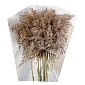 Green Orchid Reed Flower Natural Dried Flower Art Flower Arrangement Family Decoration