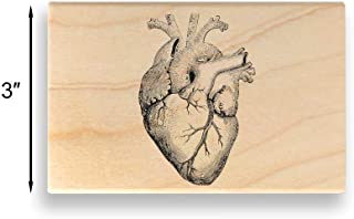 Best anatomical heart stamp Reviews