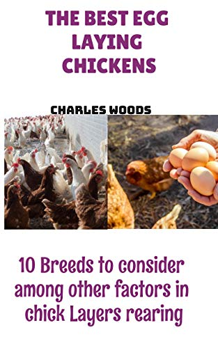 The Best Egg Laying Chickens: 10 Breeds to consider among other factors in chick Layers rearing (English Edition)