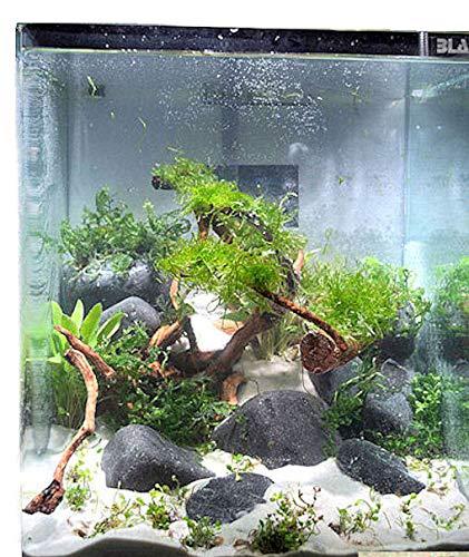 Blau Aquaristic - Nano-Aquarium Cubic 30 Liter - Basis Glas Aquarium