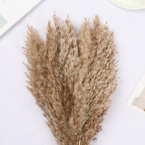 ZXY Pampa Pasto Hierba Secas Naturales Grass Flores Blancos Phragmites Tallos Flores Decoracion para Jarrones Hogar Mesa Fiesta Balcon Exteriores Interiores,Brown