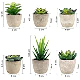Zoom IMG-1 gomaihe 6 pezzi di piante