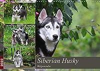 Siberian Husky - Welpenstube (Wandkalender 2022 DIN A3 quer): Siberian Husky mit Welpen spielend im Garten (Monatskalender, 14 Seiten )