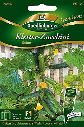 Quedlinburger 290367 Kletter-Zucchini Quine F1-Hybride (Zucchinisamen)