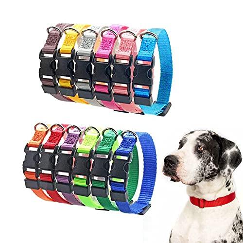 Los Mejores Collares Para Perros Pequenos – Guía de compra, Opiniones y Comparativa del 2021