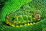 1art1 Schlangen - Grüngelbe Palmlanzenotter, Bothriechis