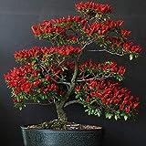 100 Piezas Hot Chili Seeds Red Trinidad Moruga Scorpion Chilli Pepper Seeds Bonsai Vegetable Seeds Semillas De Plantas Para Jardín Agrícola Semillas de chile rojo 100 piezas